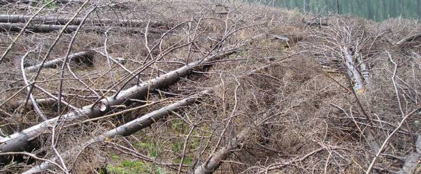 Valcea : Dezastrul lasat in urma de Romsilva pe Valea Lotrului