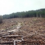 dezastrul-lasat-in-urma-de-romsilva-pe-valea-lotrului-11
