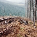 dezastrul-lasat-in-urma-de-romsilva-pe-valea-lotrului-13