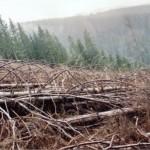 dezastrul-lasat-in-urma-de-romsilva-pe-valea-lotrului-15