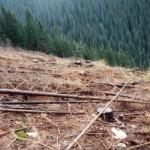 dezastrul-lasat-in-urma-de-romsilva-pe-valea-lotrului-18