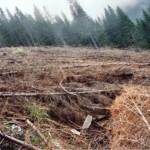 dezastrul-lasat-in-urma-de-romsilva-pe-valea-lotrului-20