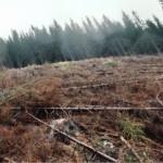 dezastrul-lasat-in-urma-de-romsilva-pe-valea-lotrului-21