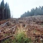dezastrul-lasat-in-urma-de-romsilva-pe-valea-lotrului-22