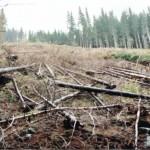 dezastrul-lasat-in-urma-de-romsilva-pe-valea-lotrului-24