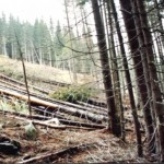 dezastrul-lasat-in-urma-de-romsilva-pe-valea-lotrului-25