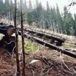 dezastrul-lasat-in-urma-de-romsilva-pe-valea-lotrului-26