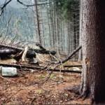 dezastrul-lasat-in-urma-de-romsilva-pe-valea-lotrului-27