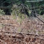 dezastrul-lasat-in-urma-de-romsilva-pe-valea-lotrului-29