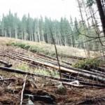 dezastrul-lasat-in-urma-de-romsilva-pe-valea-lotrului-30
