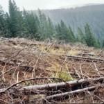 dezastrul-lasat-in-urma-de-romsilva-pe-valea-lotrului-31