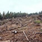 dezastrul-lasat-in-urma-de-romsilva-pe-valea-lotrului-4
