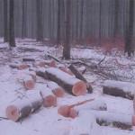 exploatarea-ilegala-a-padurilor-fondului-bisericesc-ortodox-roman-din-bucovina-2