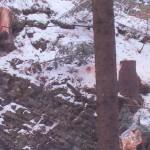 exploatarea-ilegala-a-padurilor-fondului-bisericesc-ortodox-roman-din-bucovina-6