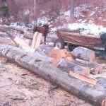 exploatarea-ilegala-a-padurilor-fondului-bisericesc-ortodox-roman-din-bucovina-7
