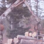 exploatarea-ilegala-a-padurilor-fondului-bisericesc-ortodox-roman-din-bucovina-9